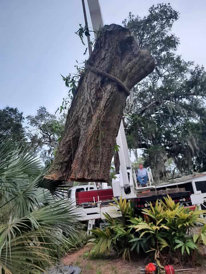 tree moving service
