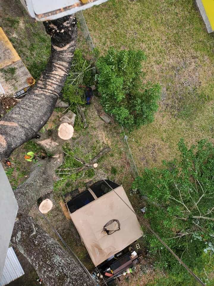 tree removal near me